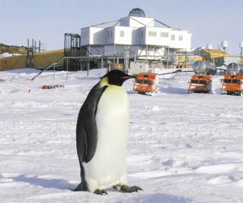 コウテイペンギンの画像 p1_16